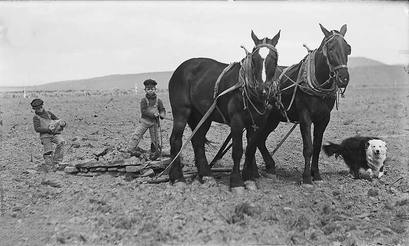 SUBMITTED PHOTO - Chester and Lloyd Luelling worked on their family farm on the Agency Plains after the family began homesteading in 1904., Madras Pioneer - News In August, the Klann Farms on the Agency Plains and 27 Bar Ranch near Ashwood reached the 100-year milestone. A Century on the Land