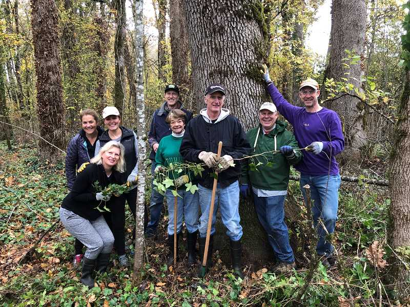 COURTESY PHOTO - Volunteers pull ivy at Westlake at a former Oswego Lake Watershed Council event.