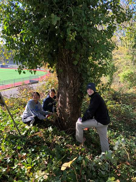 COURTESY PHOTO  - This picture was taken at an ivy pull at Lake Oswego High School with the LOHS Green Team and the Oswego Lake Watershed Council.