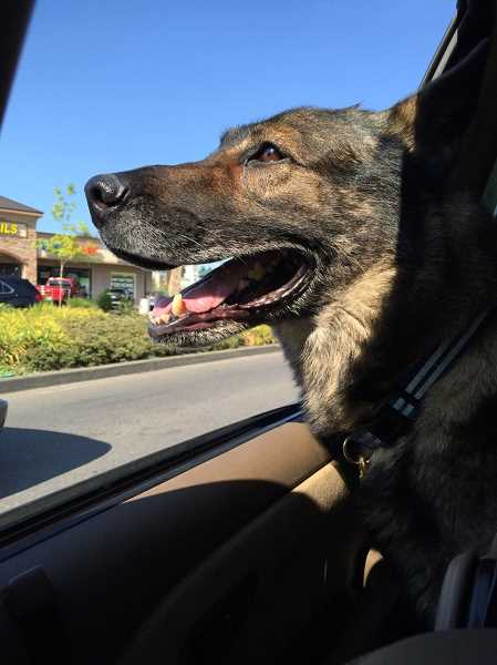 COURTESY PHOTO  - Lake Oswego Police officers mourned the loss of Charger, a beloved member of the K-9 unit.