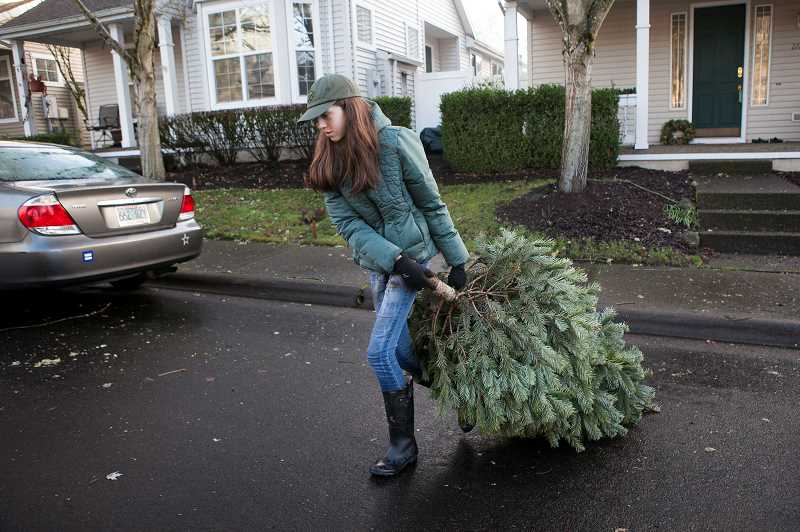 PMG PHOTO: JAIME VALDEZ - Reagan Harms, a Scout with Troop 194 and an eighth grader at Wood Middle School, pulls a Christmas tree to the back of a truck. Local Scouts collected trees as part of an annual fundraiser for Scouts.