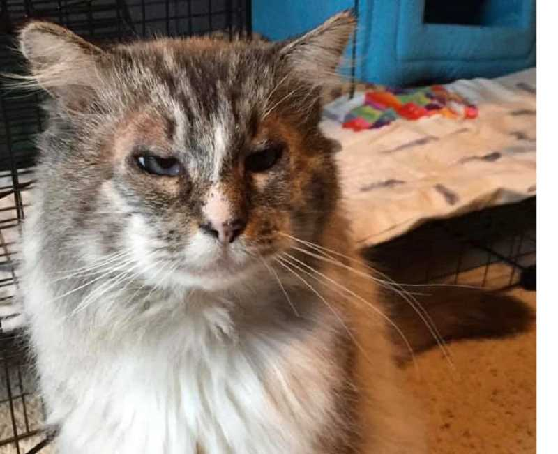 Our Community Cat Rescue in Gladstone has a cat named  Jonas up for adoption.