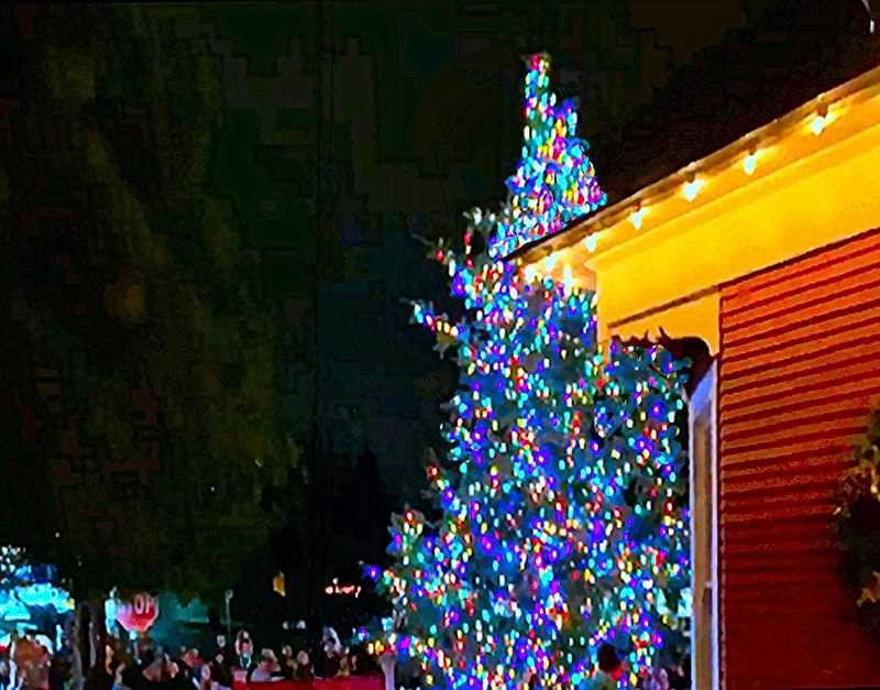 COURTESY OF CHRIS HAMMOND - The tree was lit on December 5 for another Holiday Season in Woodstock. This photo was taken from the north side of the tree, looking towards Woodstock Boulevard and the crowd gathered for the lighting.