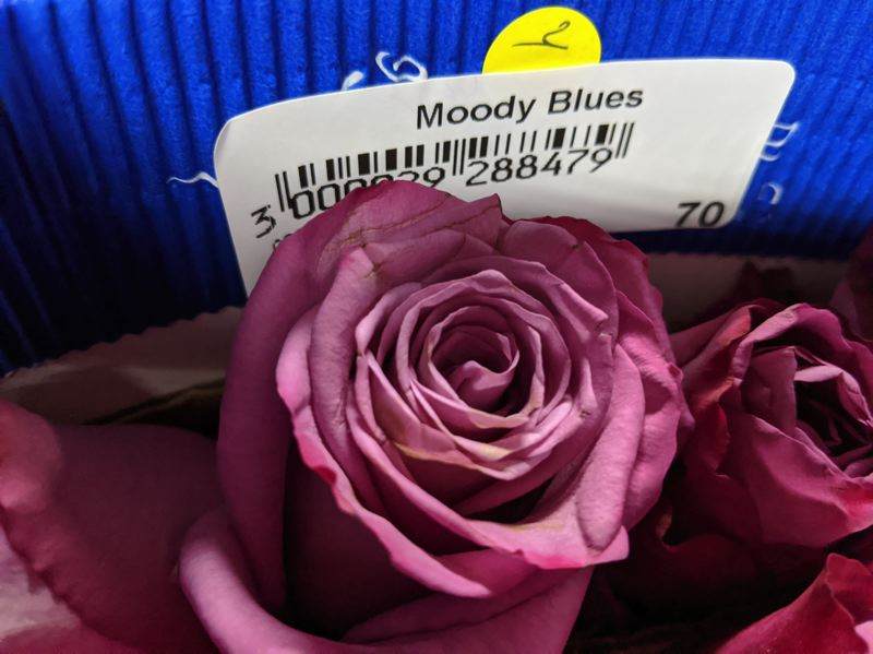 PMG: JOSEPH GALLIVAN - Roses have English names, some to appeal to Boomers.