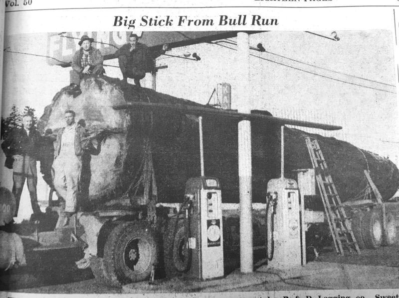 ARCHIVE PHOTO - A monster Douglas Fir log from the Bull Run forest rolled through Gresham in 1960.