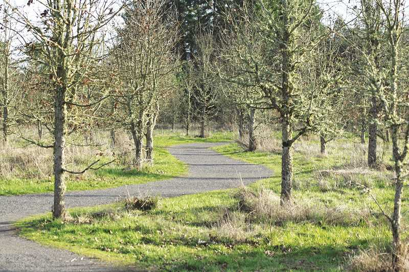SUBMITTED PHOTO - The grounds of the Tualatin River National Wildflife Refuge in Sherwood are coming alive with the advent of spring and that means the birds, aquatic animals and other creatures will be out  and about, making spring the ideal time for onlookers to lace up their boots and grab their binoculars for a look.