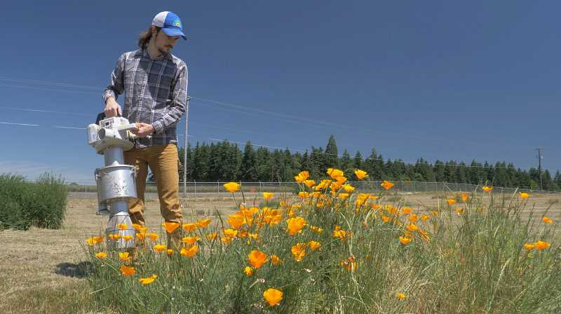 Learn what OSU research shows about the best flowers for bees, with the help of Aaron Anderson, a doctorate student with the OSU Garden Ecology Lab.