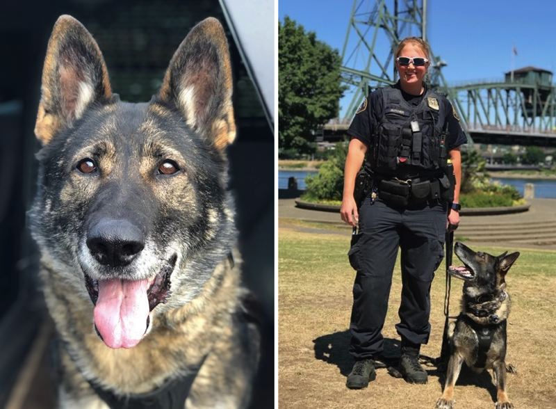VIA PPB - K9 officers Bora and her handler, Sgt. Butcher, are shown here.