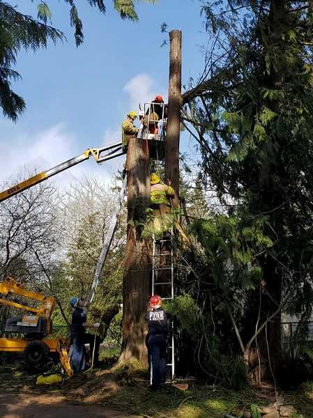 COURTESY COLUMBIA RIVER FIRE AND RESCUE - Columbia River Fire and Rescue crews responded to a rescue call Sunday, Feb. 23, when a man was pinned inside a basket lift after cutting a portion of a tree that fell into the lift due to gusty conditions. The worker was not injured and fire crews were able to successfully extricate the worker, according to information posted on the CRFR Facebook page. CRFR reminds people to use caution when cutting trees during windy conditions, the post notes.