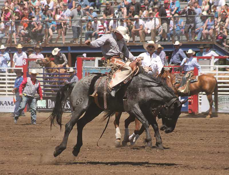 PMG: FILE PHOTO - This year's Buckeroo will tie together with Rodeo Days, events downtown during Molalla's annual four-day Rodeo. Among the events are a petting zoo, music, food and dancing among others.