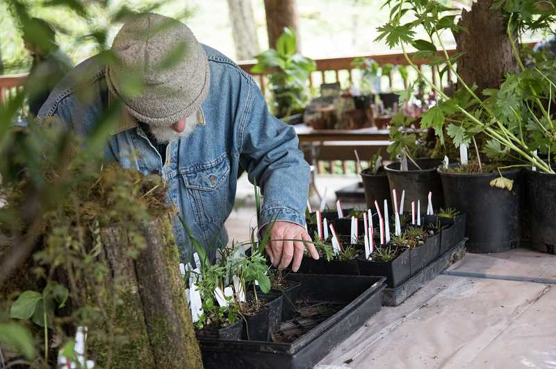 The annual Trillium Festival at Tryon Creek State Natural Area includes plants for sale and many educational displays and exhibits. It is free and open to all.