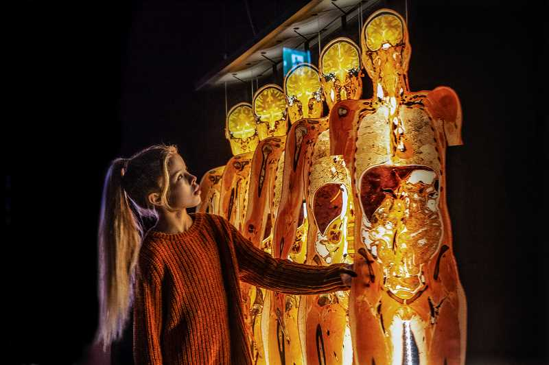 COURTESY PHOTOS  - BODY WORLDS exhibit at OMSI focuses on the human life cycle, capturing the body at every stage — at its most healthy, as it changes, grows, matures and finally wanes.