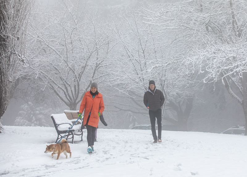 PMG PHOTO: JONATHAN HOUSE - Families, along with their pets, enjoyed the winter wonderland at Council Crest Park on Saturday morning.