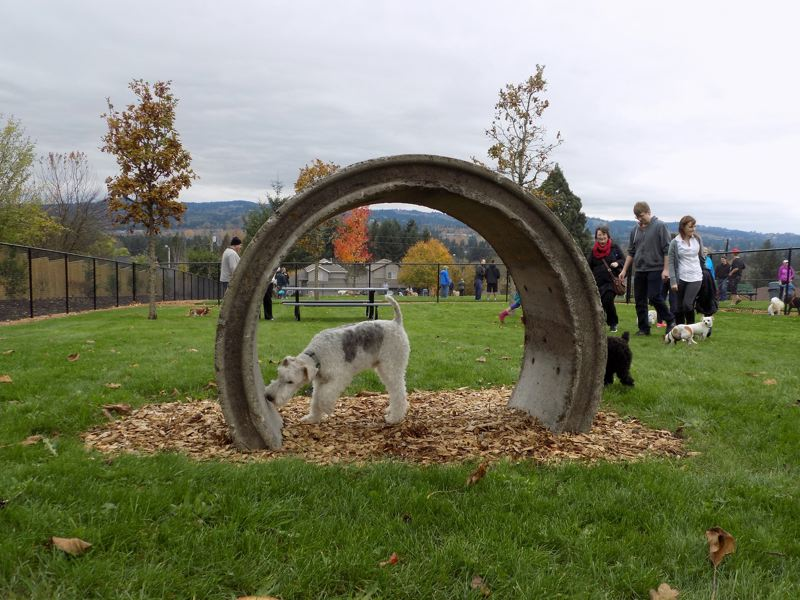 PMG FILE PHOTO: RAY PITZ - A curious pooch checks out a culvert at the Sherwood Dog Park.