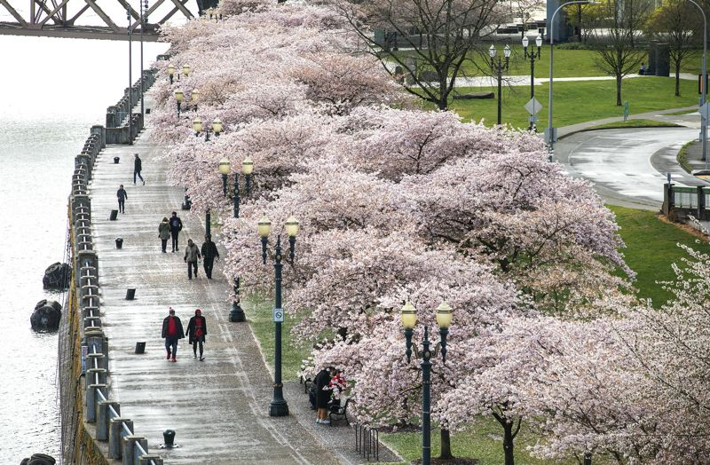 PMG PHOTO: JON HOUSE - Walkers stroll along the waterfront at Tom McCall Park in downtown Portland on Monday, March 23.