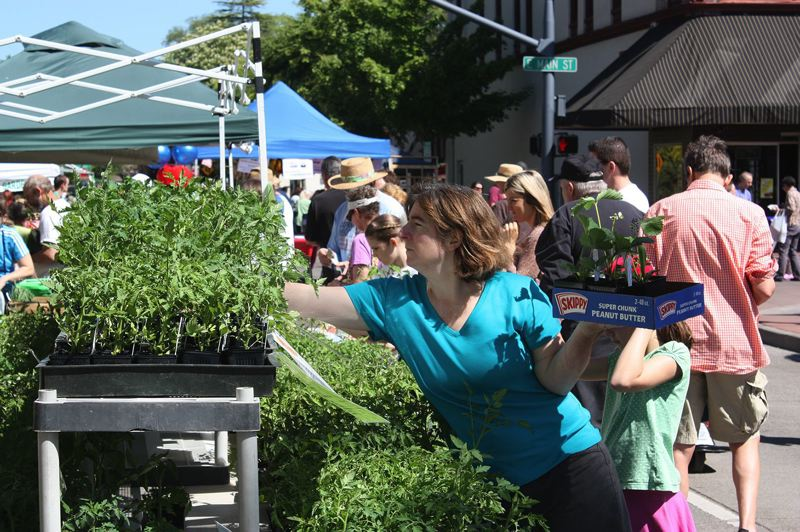 PMG FILE PHOTO: - Customers pick out plants at a booth in the Hillsboro Farmers' Market's downtown market.