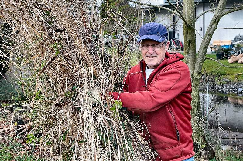 DAVID F. ASHTON - Volunteers helped pull up the Reed Canary Grass which Crystal Springs Creek Partnership Board Member Bob Fedoroff calls the main enemy along the urban stream.