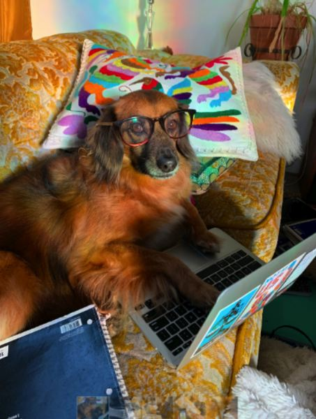 COURTESY SUZIE KASSOUF  - Multnomah County wants pictures of your pets completing the 2020 Census.