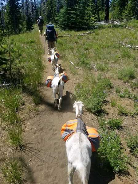 PHOTO COURTESY OF ADAM SATHER 