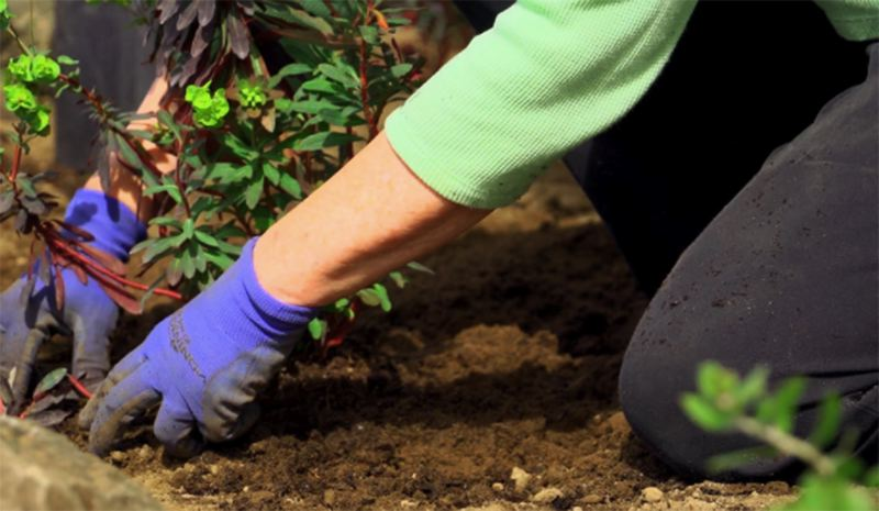 COURTESY PHOTO: OSU MASTER GARDENERS - It's time to get your hands dirty and make your garden happy with new gardening tips, classes  and information from OSU Master Gardeners.