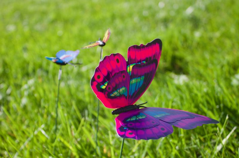PMG PHOTO: CHRISTOPHER KEIZUR - Butterflies are considered a symbol of the human soul and life after death.