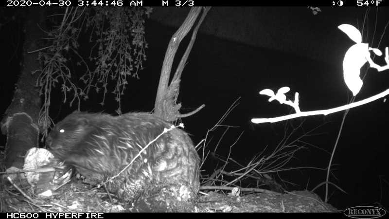 PHOTO COURTESY OF JAMES YOUNG
