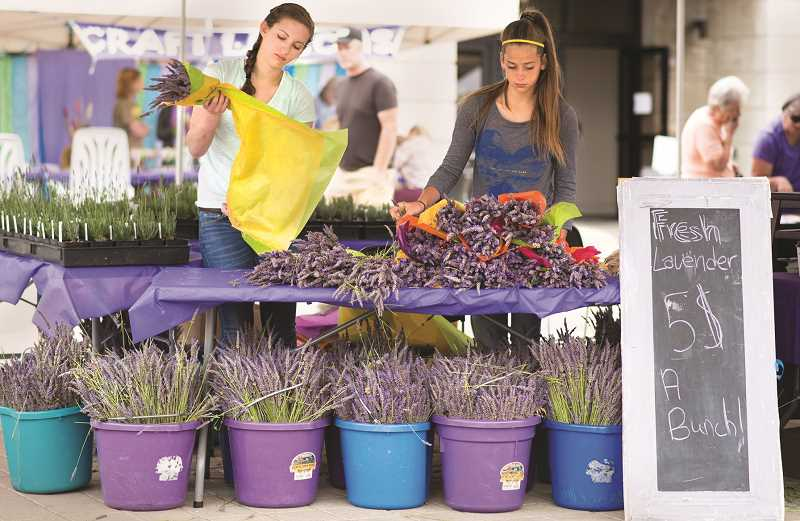 NEWBERG GRAPHIC FILE PHOTO - Organizers announced recently that the annual Lavender Festival & Paint Out will be canceled in recognition of the COVID-19 pandemic.