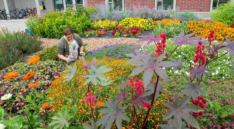 COURTESY PHOTO: OSU EXTENSION - This year Master Gardeners are offering free online courses for home gardeners who normally have to pay for the classes.