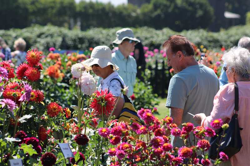 PMG FILE PHOTO: KRISTEN WOHLERS - Crowds gather at the Swan Island Dahlia Festival in 2019. This year's event is canceled.