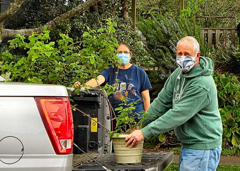 ELIZABETH USSHER GROFF - Woodstock resident Mark Ripkey, assisted by Sandy Profeta, unloads raspberry and chive plants dug from his garden - to help supply the 2020 Woodstock Neighborhood Associations online, by appointment only pop-up plant sales.