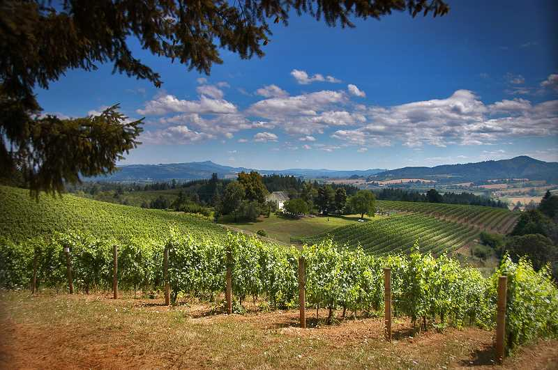 COURTESY PHOTO: PAUL LOOFBURROW - A view over the David Hill Winery in Forest Grove. David Hill is part of the new Tualatin Hills AVA.