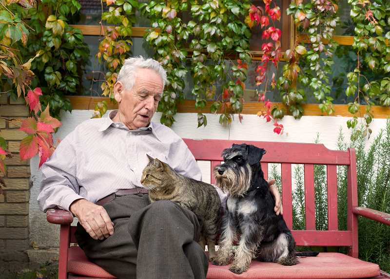 COURTESY PHOTO: 123RF - There are resources for seniors with pets, including a dog and cat food bank.