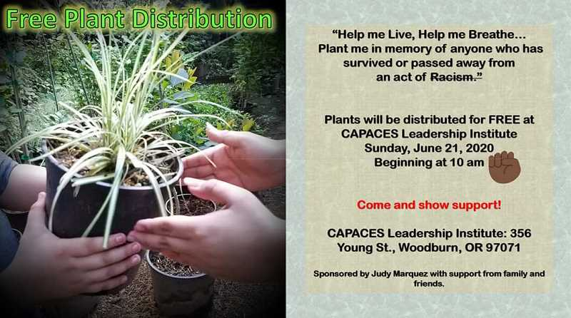 COURTESY PHOTO: JUDY MARQUEZ - Free plant distribution at CAPACES on June 21.