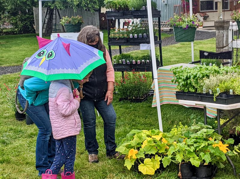 PMG PHOTO: EMILY LINDSTRAND - Plants were just one item attendees of the Estacada Farmers Market could peruse through.