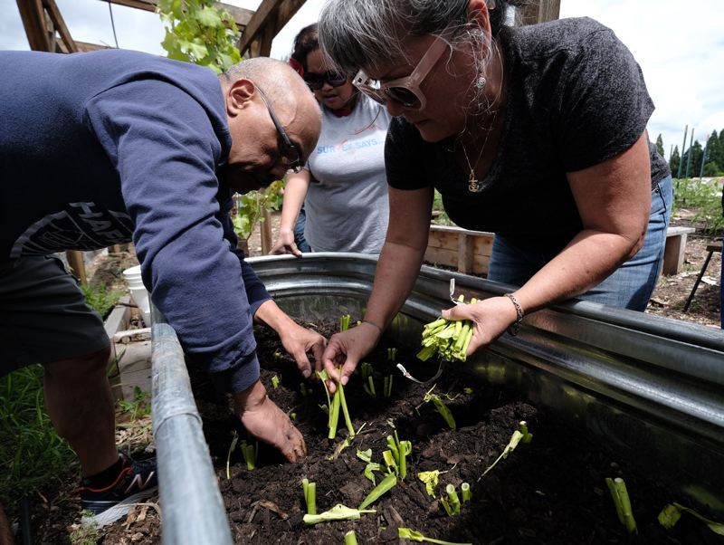 UNDERSCORE NEWS: ALEX MILAN TRACY - Sandi Wells leads planting seminars for Micronesian immigrants at the Oregon Food Bank, helping them adjust to a drier growing season while their homelands face the increasing  threat of floods.