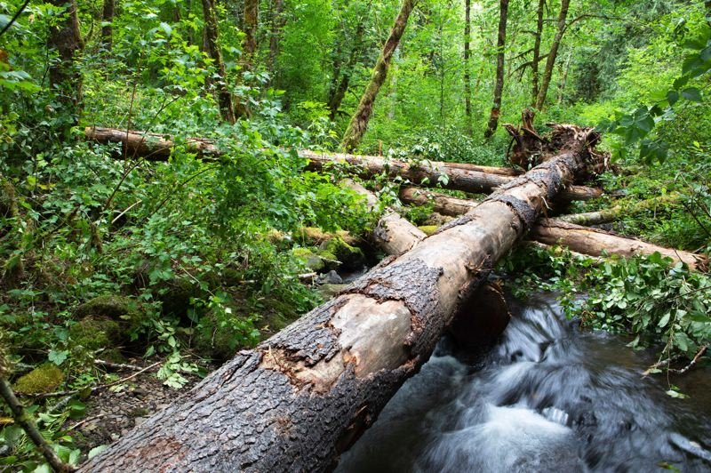 COURTESY PHOTO - Logs create a habitat for fish in Suter Creek.