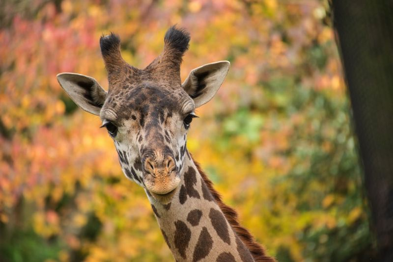 Zoo reopens after four months without visitors
