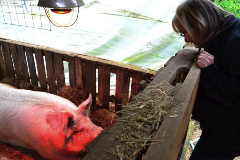 PMG FILE PHOTO: BRITTANY ALLEN - Sugar Maple Swine has been raising pigs and selling pork for six years.