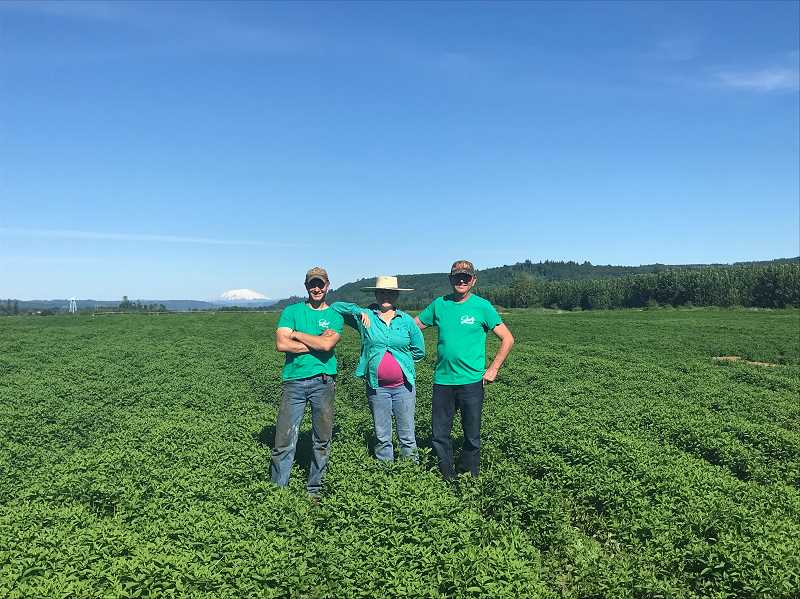 COURTESY PHOTO - Mike Seely (right) stands in a native spearmint field on Wednesday, June 1. The third-generation farmer is joined with his children Warren Seely (left) and Caryn Seely (middle).