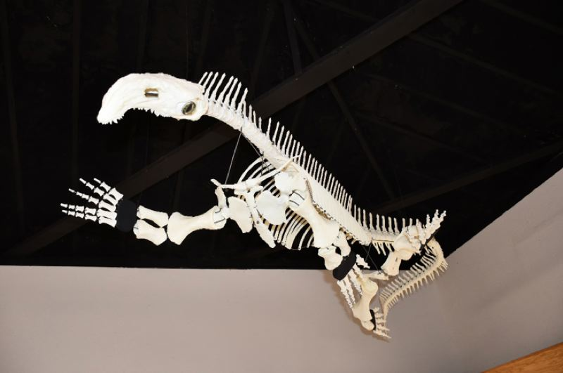 COURTESY PHOTO: RICE MUSEUM OF ROCKS & MINERALS - A 3D-printed replica of a 230-million-year-old reptile found in central Oregon named 'Bernie' now on display at the Rice Museum of Rocks & Minerals.