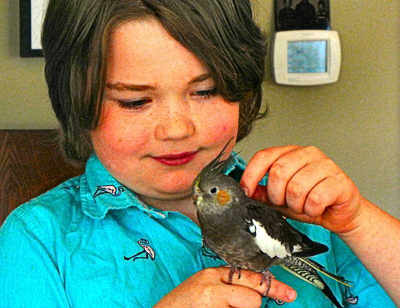 ELIZABETH USSHER GROFF - Ten year-old George Cowan, a Woodstock resident, is reunited with his four-month-old cockatiel Carl, after the bird accidentally escaped into the neighborhood.