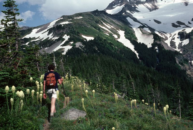 COURTESY PHOTO: U.S. FOREST SERVICE - PACIFIC NORTHWEST REGION - The Timberline Trail is accessible from multiple points on Mount Hood and offers a variety of hikes.