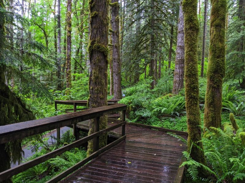 PMG PHOTO: BRITTANY ALLEN - Wildwood Recreation Site near Welches includes miles of boardwalks, paved trails, access to the Salmon River and much more.