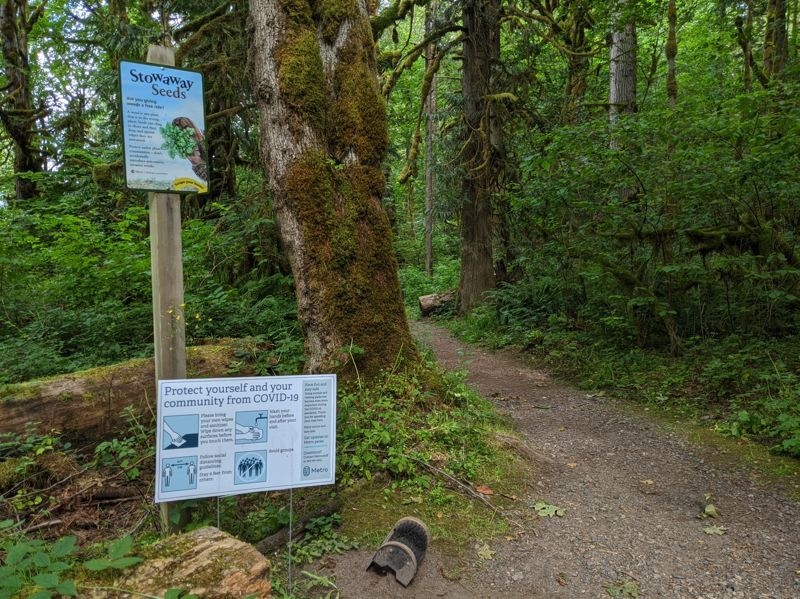 PMG PHOTO: BRITTANY ALLEN - Oxbow Regional Park offers multiple trails to hike and access to the Sandy River.