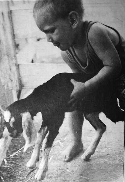 CENTRAL OREGONIAN - August 1, 1995: Fair-goer Guy Wendt shows a two-day old nubian goat which pen is hers.