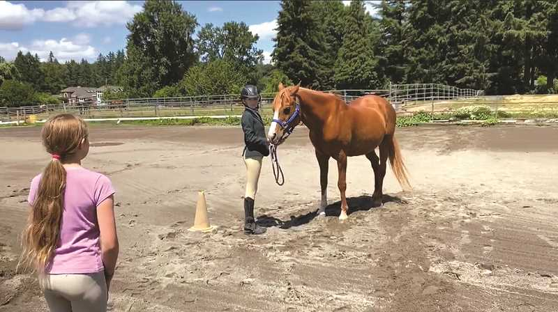 Cancelled horse show gallops to virtual success