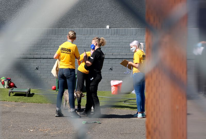 PMG PHOTO: ZANE SPARLING - Portland Police Bureau officers and forensic veterinarians from the Oregon Humane Society were on scene after a search warrant was served at Woofin Palooza on 82nd Avenue on Tuesday, Aug. 11.