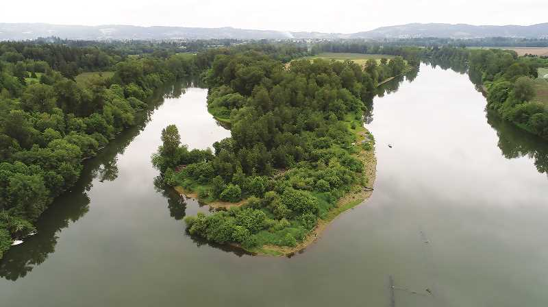 COURTESY PHOTO: WILLAMETTE RIVERKEEPERS - Earlier this month, the nonprofit Willamette Riverkeepers announced the acquisition of a portion of Ash Island along the river in Newberg, a nearly 10-acre property just upriver from Rogers Landing.