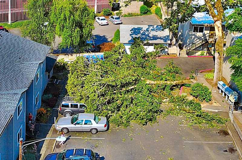 COURTESY OF MICHAEL JACKSON - This aerial photo, taken by resident Michael Jackson, shows the fallen limb - before crews began removing the branches.
