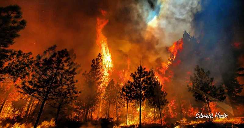 EDWARD HEATH - Flames engulf timber on the Warm Springs Indian Reservation Aug. 19. The largest fire on the reservation is the 1,500-acre P515 fire.